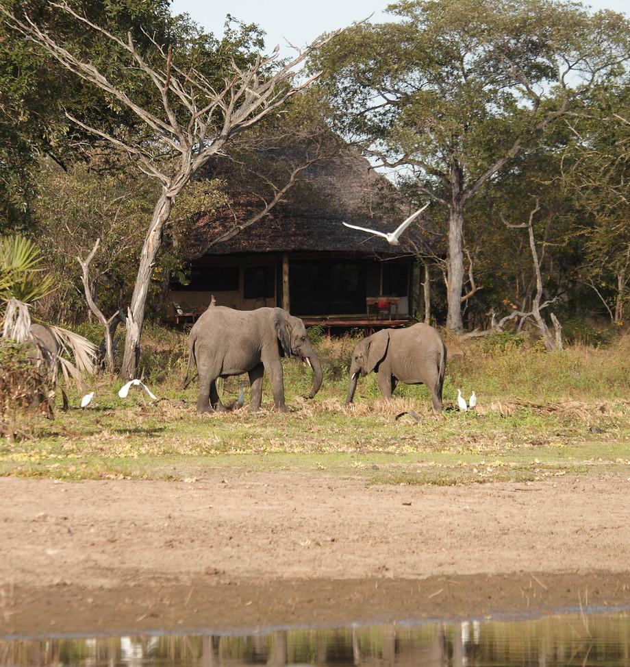 Elephants at Siwandu Tents, Nyerere, Selous, Tanzania