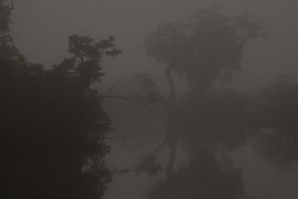 Akaka Dark Misty Loango Gabon