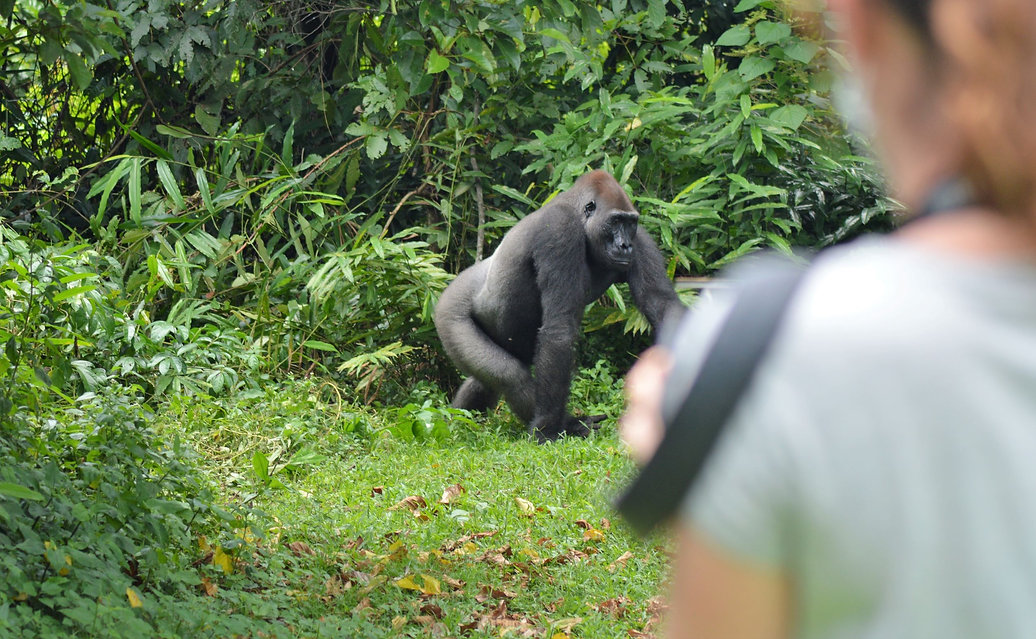 Travel Gabon Loango Rates & Packages