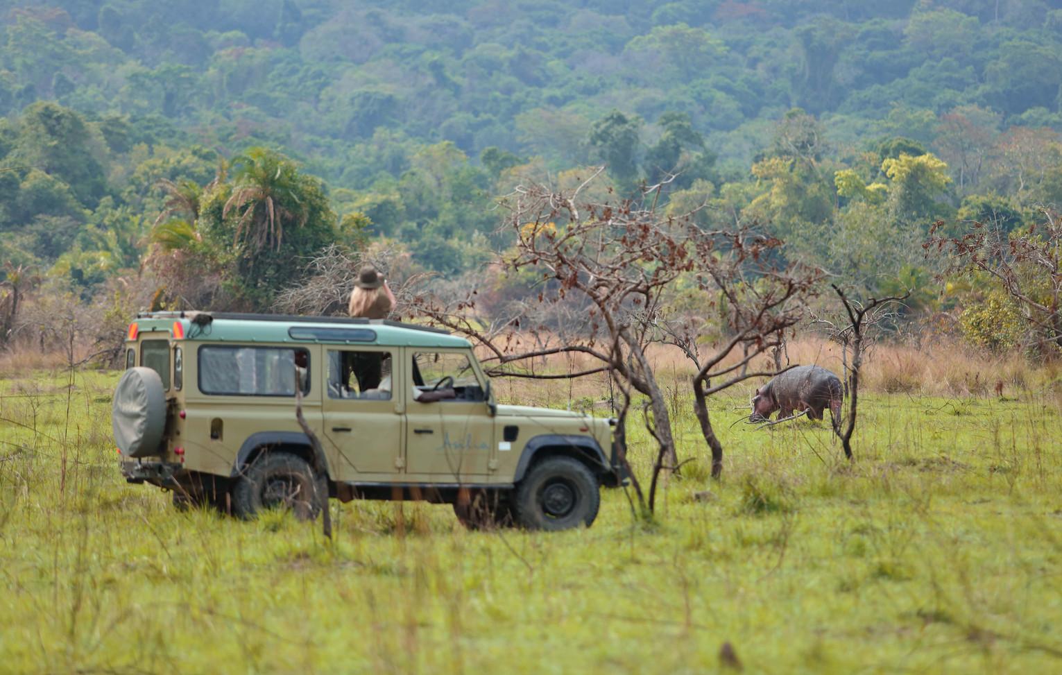 Hippo Spotting Game Drive Rubondo Island Tanzania