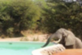 Travel Tanzania Selous Ruaha Luxury Safari Beach Retreat