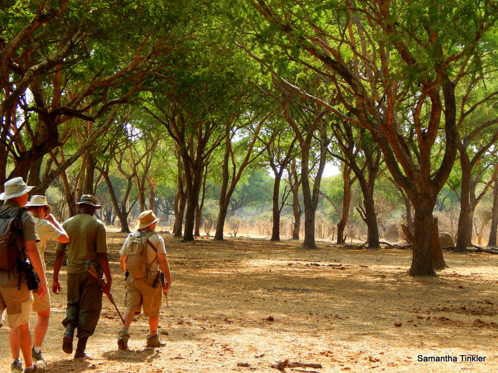 Walking Safari Jongomero Ruaha
