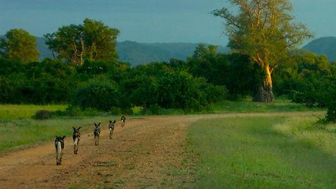 Travel Zambia Zikomo Safari Luangwa Wildlife