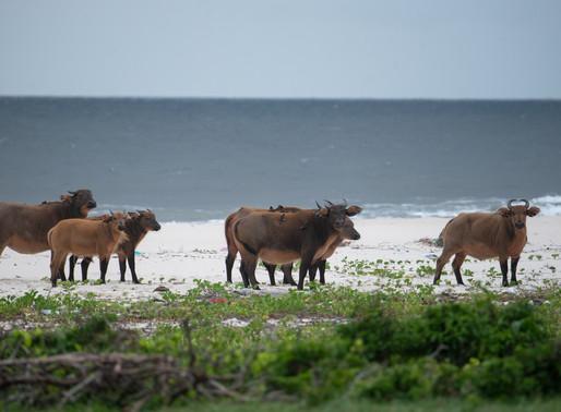 West African Safari vs East African Safari
