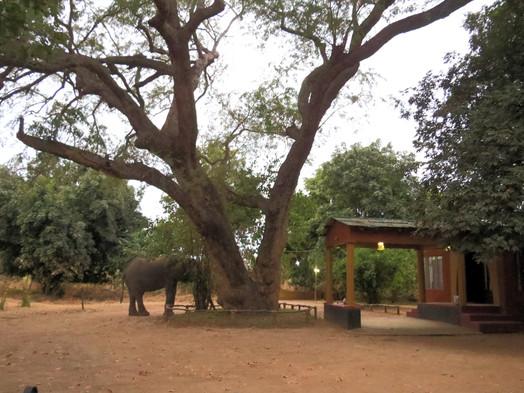 Elephant Approaching Zikomo Safari Camp