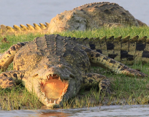Siwandu Croc, Nyerere, Selous, Tanzania