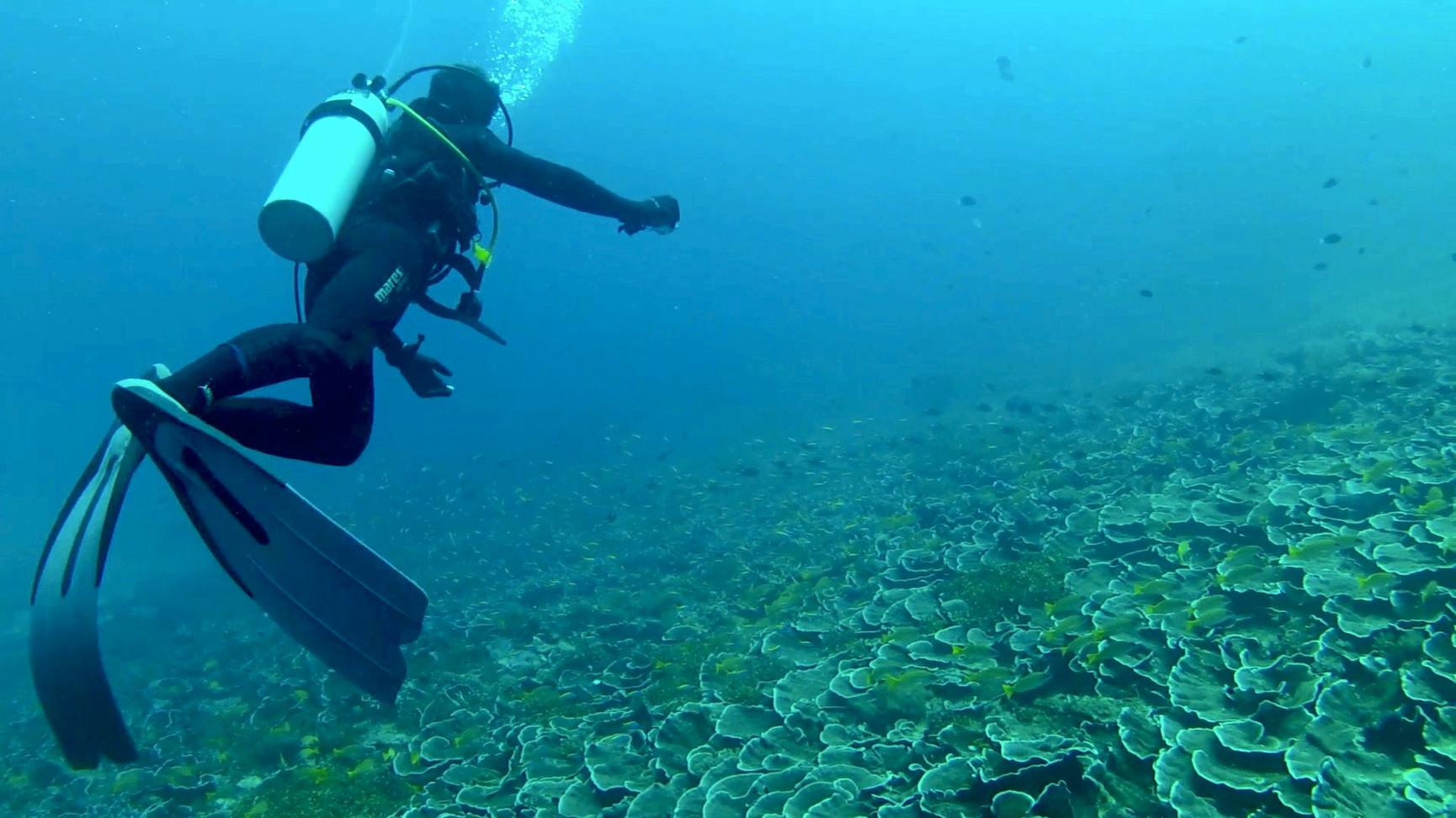 Tanzania Fanjove Island Diving
