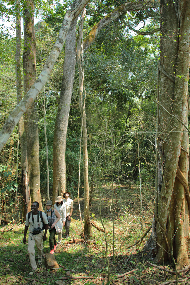 Guided Forest Walk Experience Rubondo Chimp Island Tanzania
