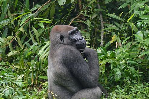 Travel Gabon Loango Lodge