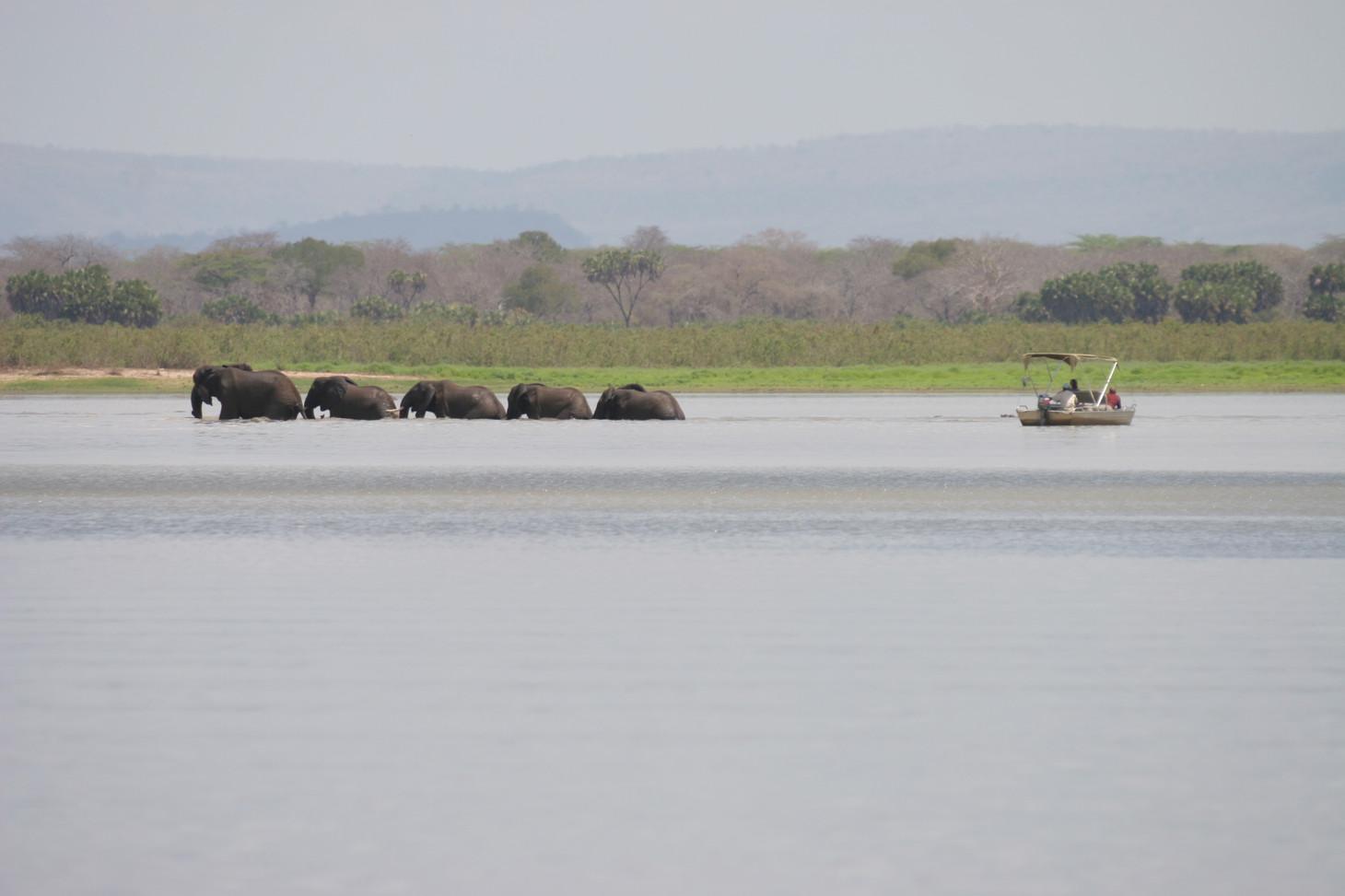 Boat Safari Nyerere Selous Tanzania