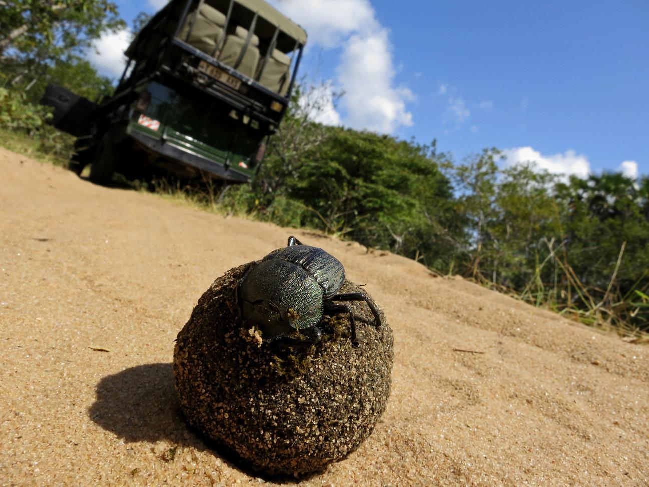 Safari Drive Nyerere Selous Tanzania