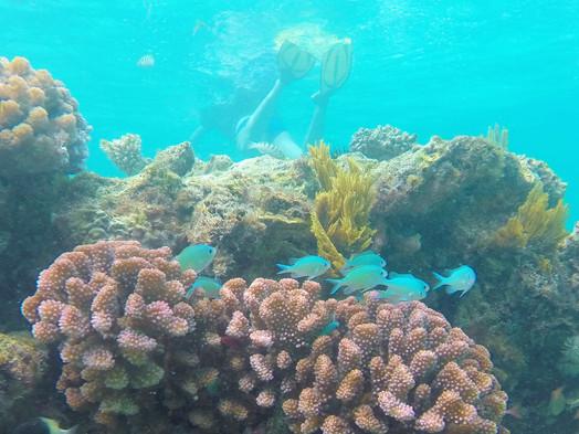 Tanzania - Fanjove Island - Snorkeling