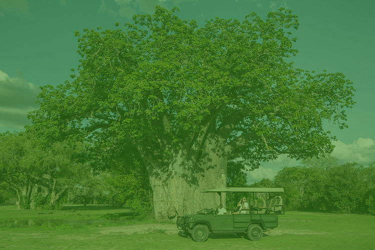 Baobab%20Jongomero%20Ruaha%20Tanzania_ed