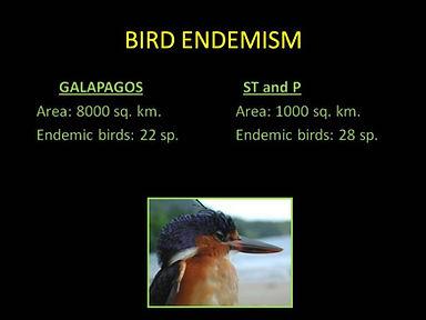 Bird Endimism São Tome Príncipe