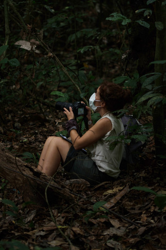 Photographing Gorillas Above