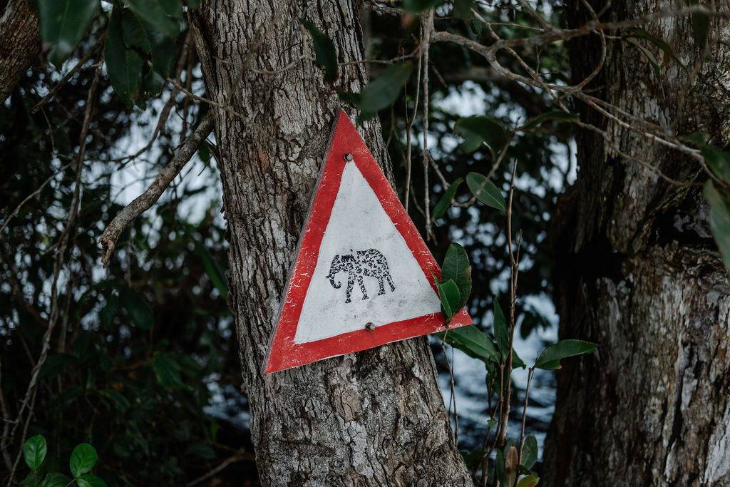 Beware of Elephants! Louri Wilderness Camp Loango Gabon