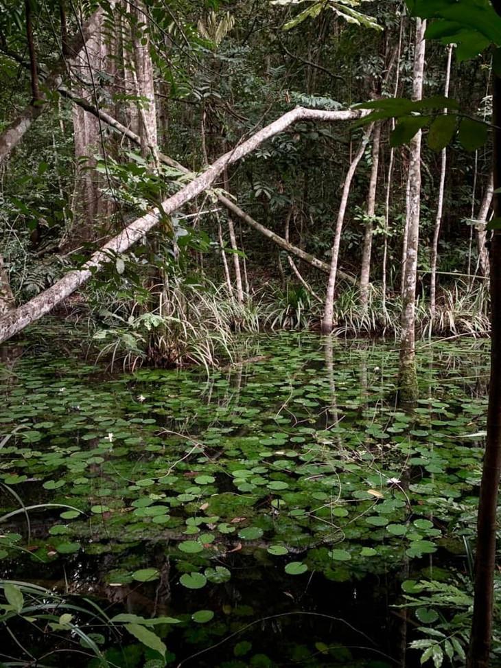 Lake Lilly Pads Pongara Lodge Gabon