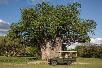 10 Night Bush & Beach Safari Package Nyerere Ruaha Fanjove Tanzania