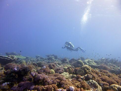Tanzania Fanjove Island Diving SongoSongo Archipelago