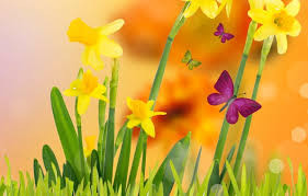 daffodils with butterflies