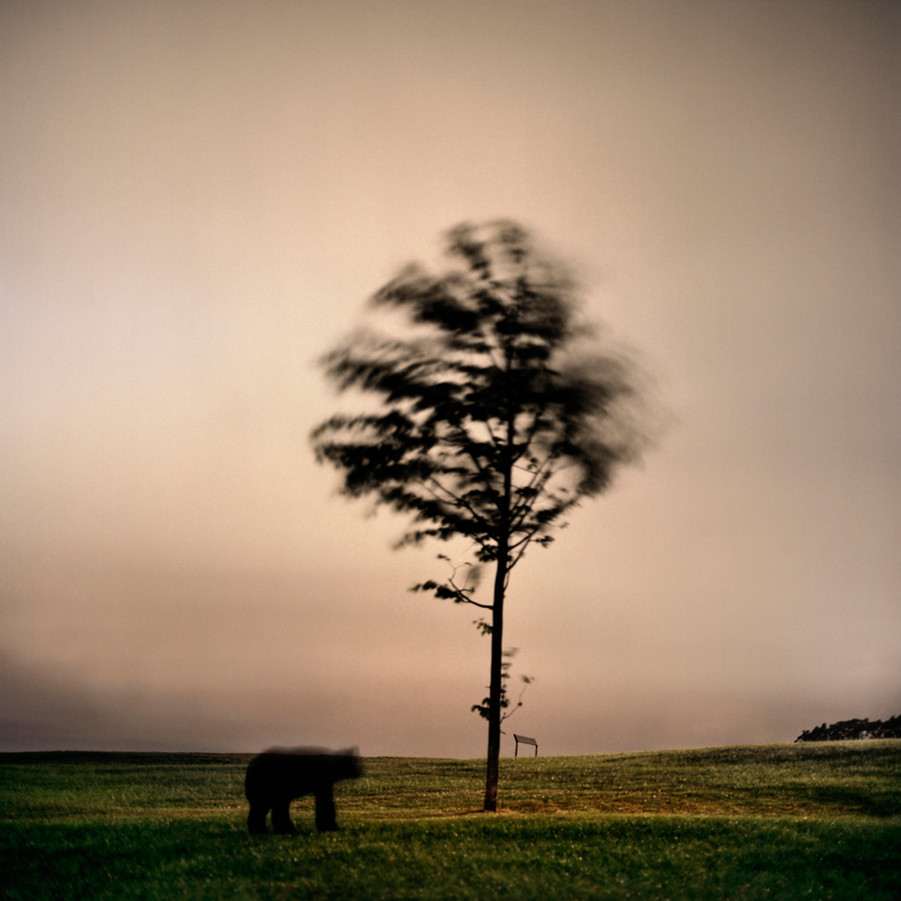 Imputed Scenery_Bear Archival pigment print 90 x90 cm Photography 2012