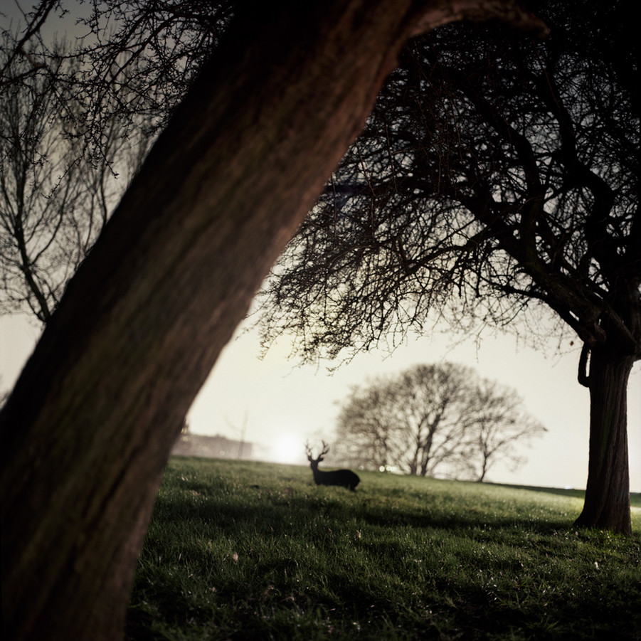 Imputed Scenery_Deer Archival pigment print 90 x90 cm Photography 2012