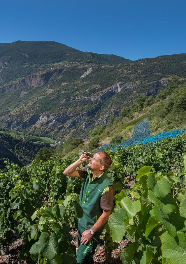 Johanneli Fi Weinkeller, Schweizer Weintourismuspreis, Visperterminen, Höchster Weinberg Europas, Heida