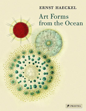 Art Forms from the Ocean