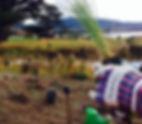 Grove planting_May2014.JPG