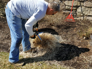 It's Early Spring...Time To Prune Back Grasses, Roses & Perennials.
