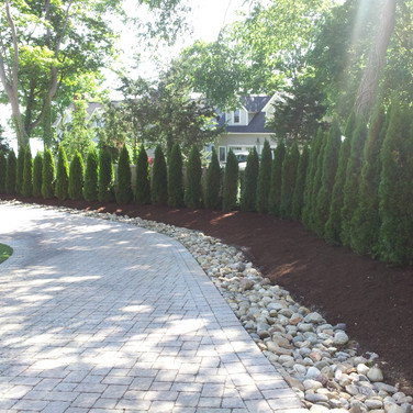 Emerald Green Arborvitae Privacy Hedge.  92 plants in total gave this client a beautiful private hedge in just a few days.