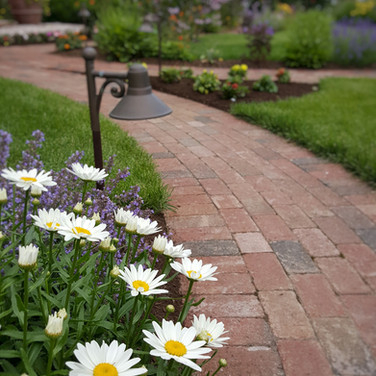 Shasta Daisy's and Brick Pathway