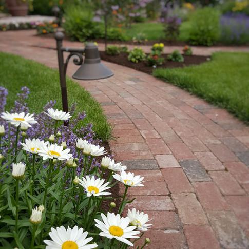 Shasta Daisy's and Brick Pathway