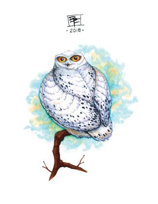 White-Snowy-Owl-Art