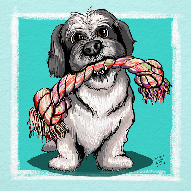 Shih Tzu and Rope.jpg