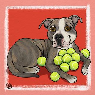 Pitbull and Tennis Balls.jpg