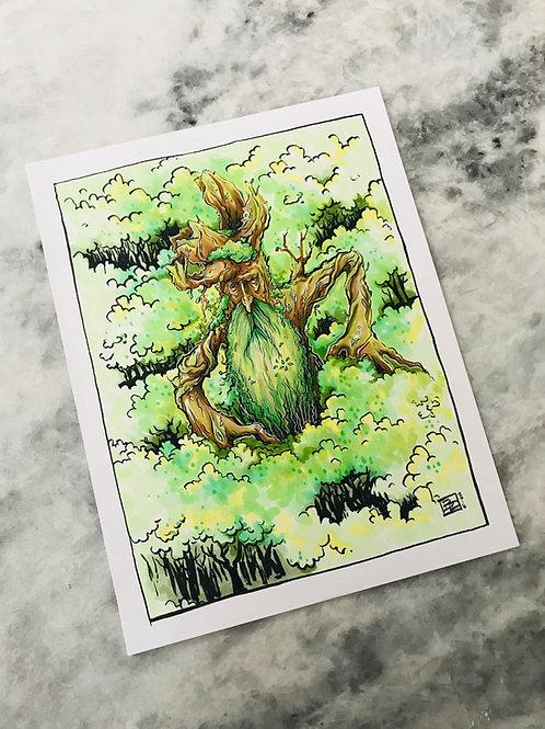 Forest Shepherd
