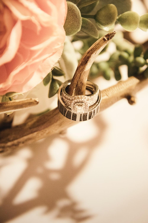 Wedding rings on deer antler with pink rose