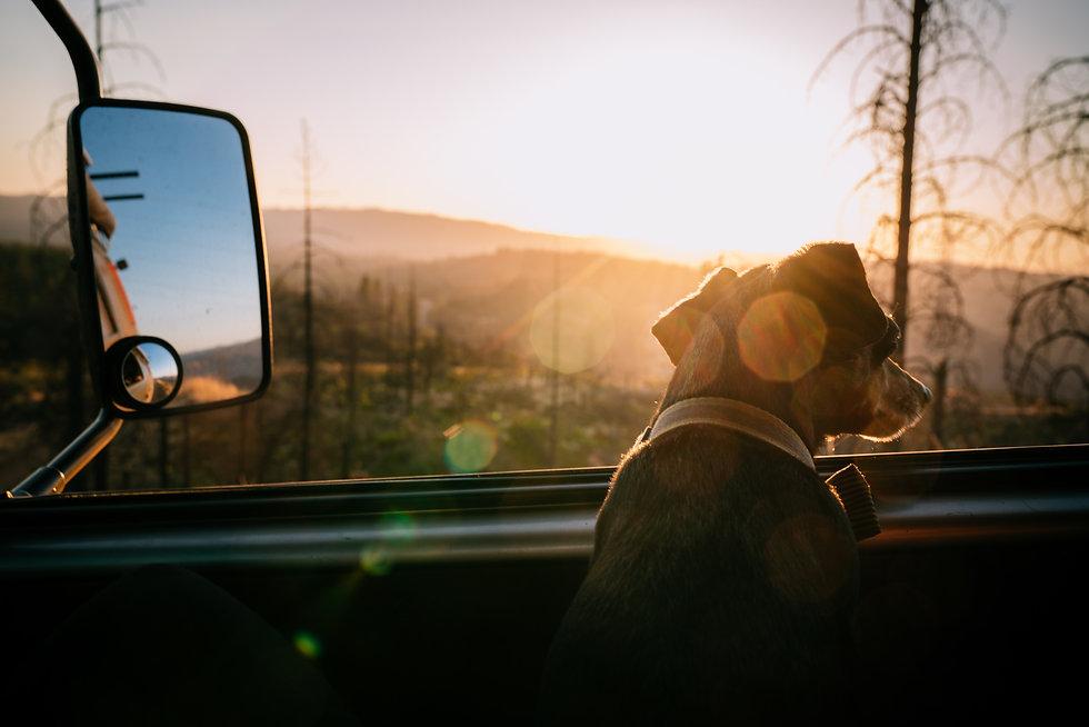 drive-home-marketing-tulsa-dog.jpeg