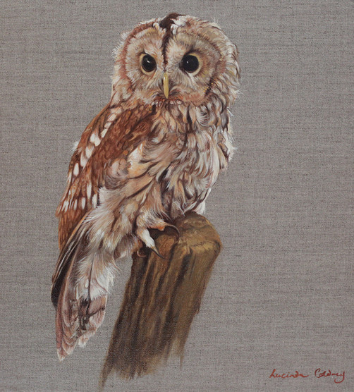 """""""Old Brown"""" oil on canvas - SOLD"""
