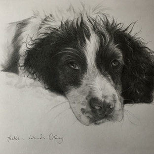 hector -  pencil on paper