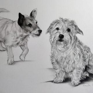 Charcoal pet portrait