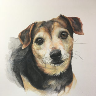Chloe - Watercolour on paper