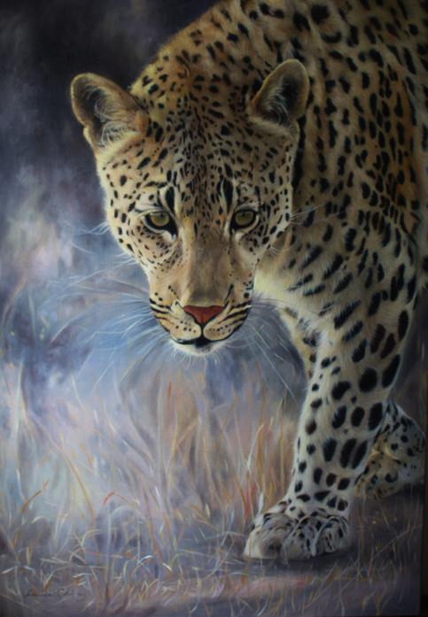 Gentle Tread - Londolozi Leopard.