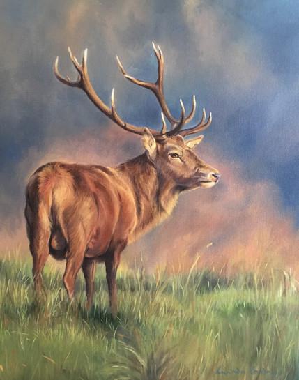 Evening Light - Oil on canvas, framed: £