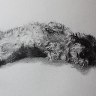 Charcoal of Smartie