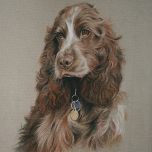 Daisy - Pastel on paper