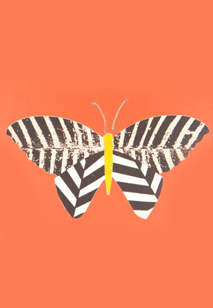 Zebra Butterfly