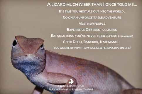 Lizard much wiser than I