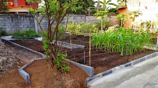 Gardening in Thailand